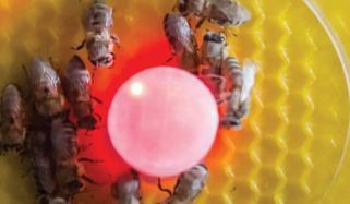 Between Bees And Fish Talking Robot
