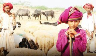 Rebari Tribe