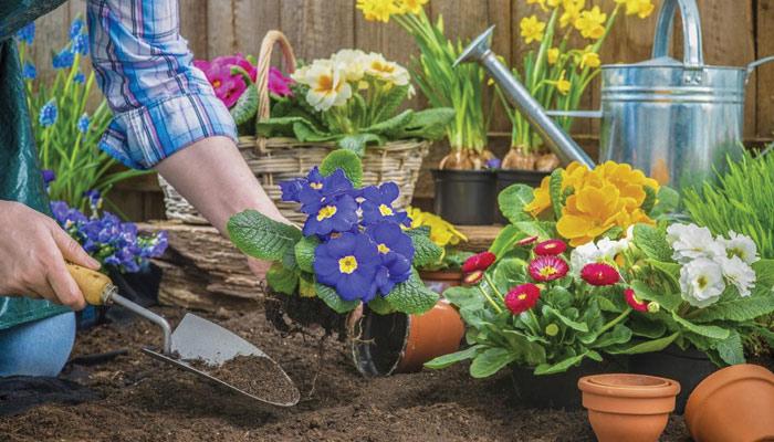 آئیے باغبانی کریں