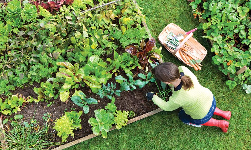 باغبانی کے حیرت انگیز فوائد