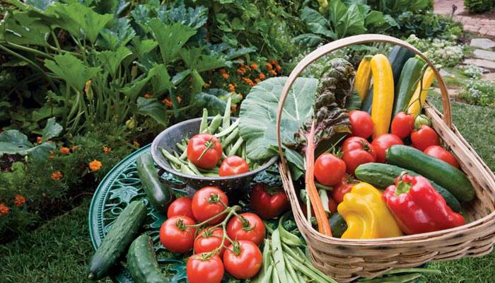 گھر میں سبزیاں اُگانے کے فوائد