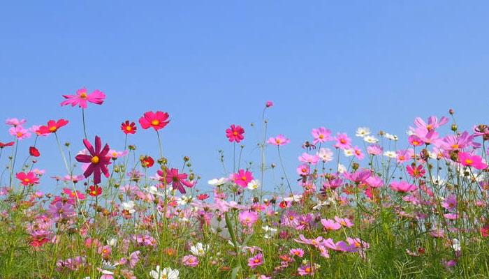 زمیں پہ پھول آسماں پہ تارے
