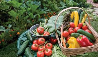 Benefits Of Growing A Vegetable At Home