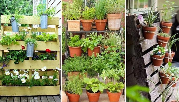 گھر میں باغبانی کریں