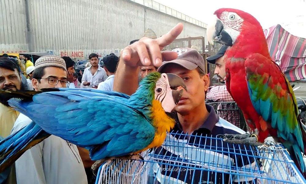 پرندے پالنے کا شوق اب کاروبار بن گیا