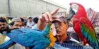 Birds Market Of Liaquatabad