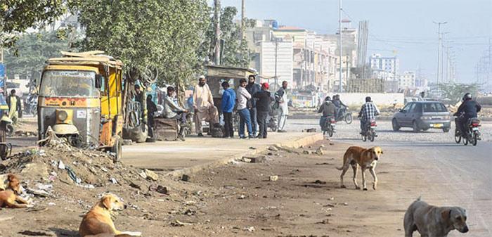 کراچی میں سگ گزیدگی کے بڑھتے ہوئے واقعات