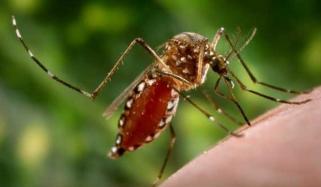 How To Avoid Dengue Fever