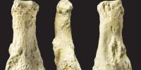 Fossils Of Human