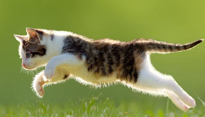 پنٹو کی چھلانگ