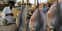 Fish Sajji