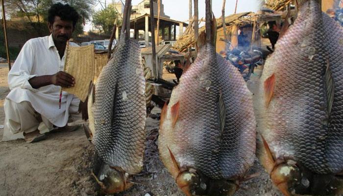 'مچھلی کی سجی' سانگھڑ کا خصوصی پکوان