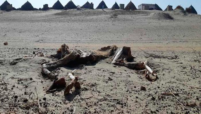 ''صحرائے تھر'' قدرتی وسائل سے مالا مال خطہ، باسی بھوک و افلاس کا شکار