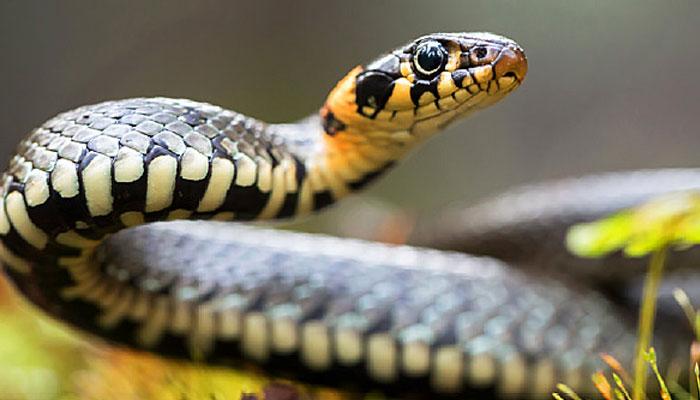 دنیا کا خطرناک ترین جانور کون سا ہے؟