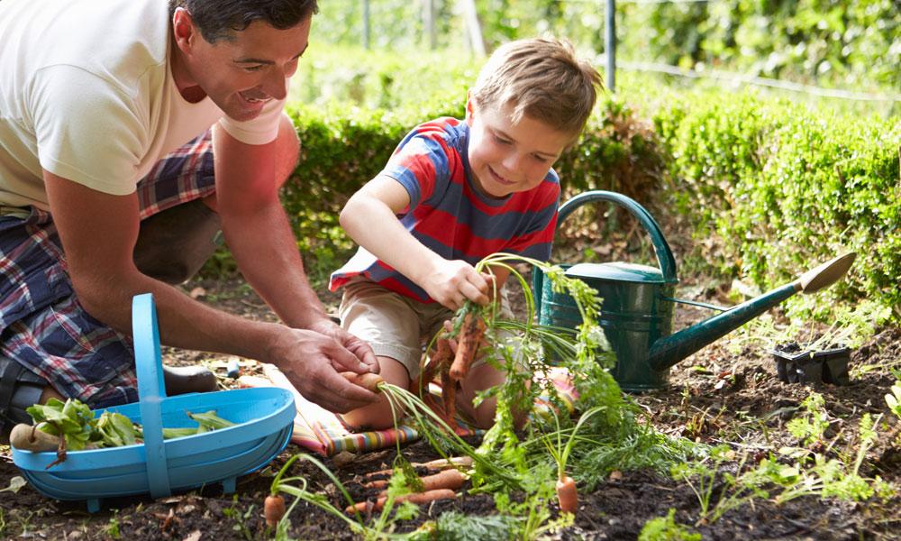 گھریلو باغبانی سے مہنگائی کا مقابلہ کریں