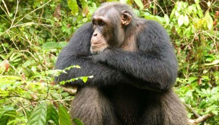 دنیا کے چند ذہین جانور