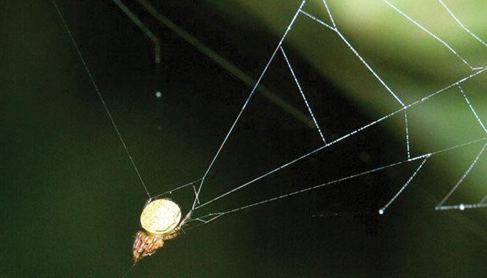 جالے کی غلیل سے خود کو 'فائر' کرنے والی مکڑیاں
