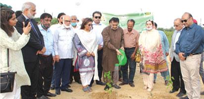 کراچی اسپورٹس فاؤنڈیشن کی شجر کاری مہم