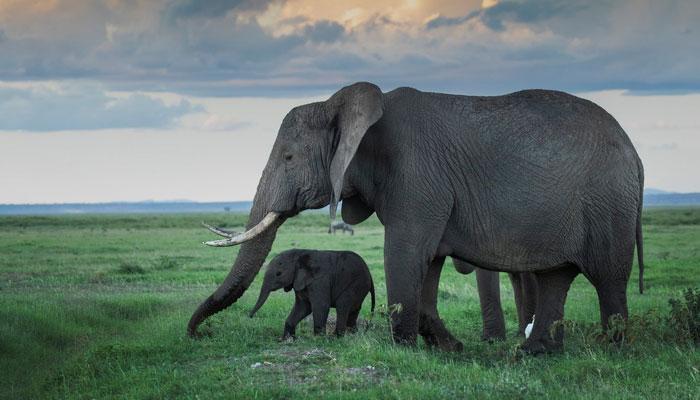 ہاتھی کے بارے میں دلچسپ معلومات