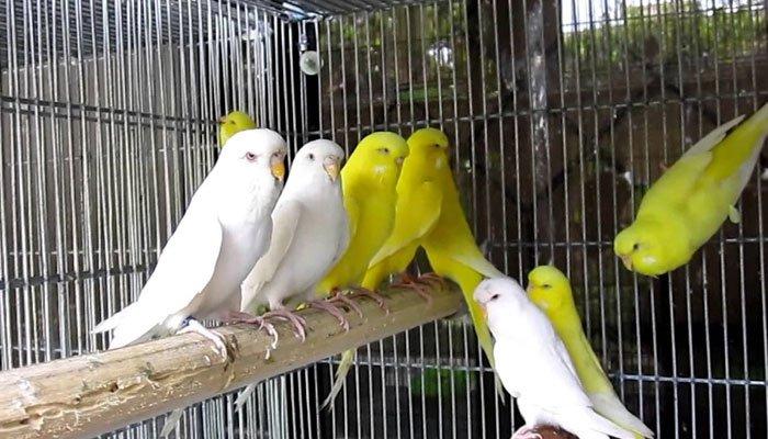 پرندے پالنے کا حکم (گزشتہ سے پیوستہ)