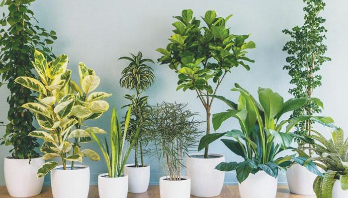 گھر کی فضا کو کیسے صحت مند رکھا جائے؟