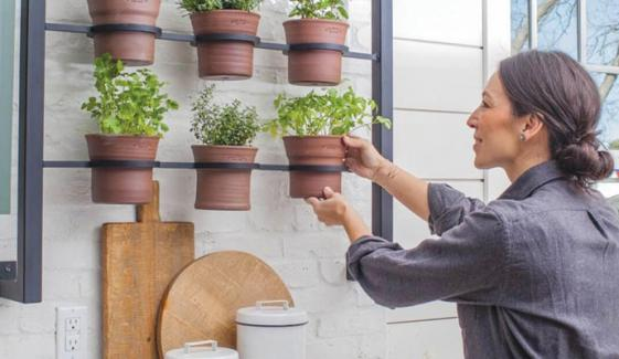 Gardening In Kitchen