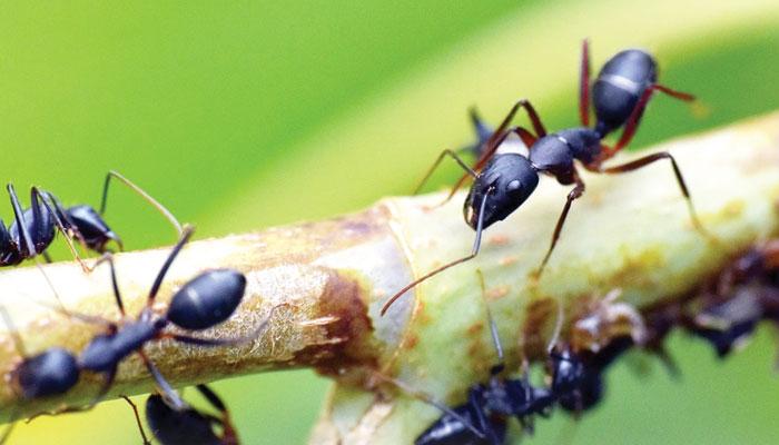 حشرات کا منظم سماجی طرز حیات