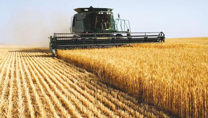 خوراک کی عالمی فراہمی میں زرعی بیجوں کا کردار