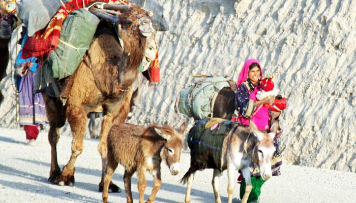 سندھ کے خانہ بدوش کے قبائل