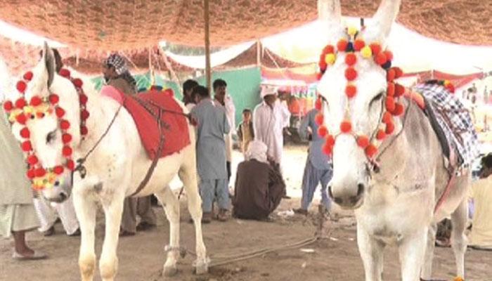 سندھ کی روایتی ''خرمنڈی''