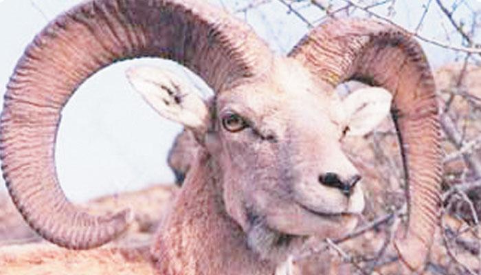 بلوچستان: نایاب جانوروں، پرندوں کا مسکن