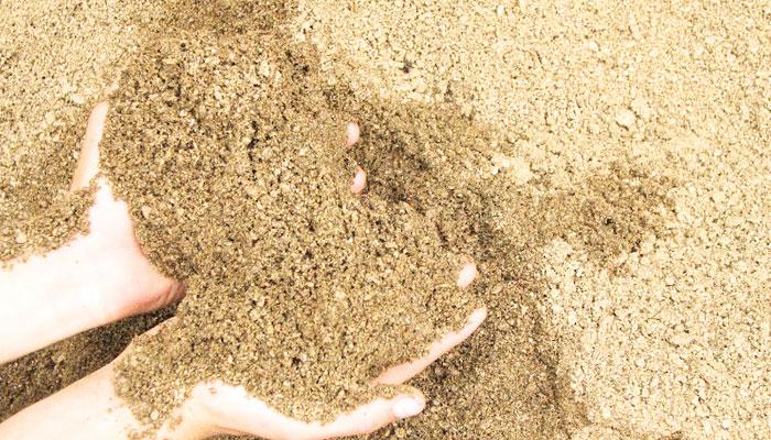 مٹی بے کیف زمین پر حیات کی ضامن