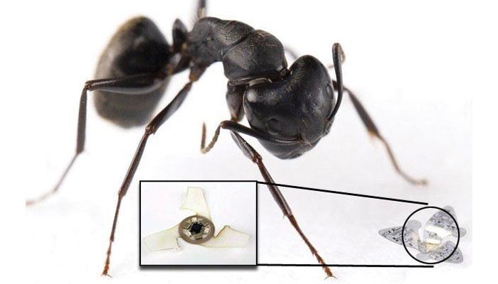 شکر کے دانے جتنا ''مائیکروفلائر'' ڈرون