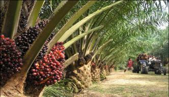 Malaysia Palm Oil Prices Down