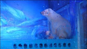 World Saddest Polar Bear Kept In Chinese Mall