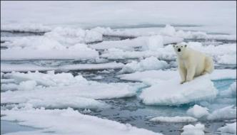 Next Year Or The Year After The Arctic Will Be Free Of Ice