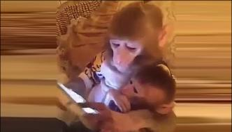 Monkeys Gone Crazy For Mobile Phones In China