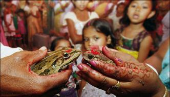 Wedding Of Frog Rain In India