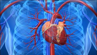 Eighty Per Cent Of Heart Diseases Can Be Avoided Experts