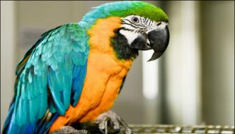 Parrot Informed His Woman Owner Regarding Her Husbands Affair With Maid