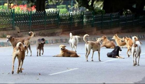 Kill A Stray Dog And Get A Gold Coin In Kerala