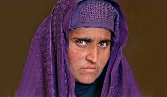 Sharbat Gula Bail Plea Rejected By Special Court