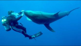 Brave Diver Who Tame The Dangerous Shark In Joy Making