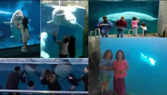 Whale Dancing On Kids Action