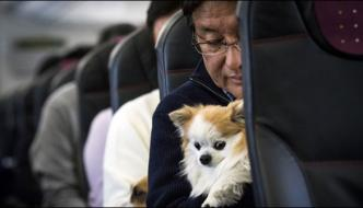 The Dog Will Also Enjoy Trips In Airplane