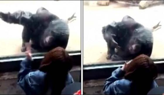 Chimpanzee Got A New Friend In China Zoo