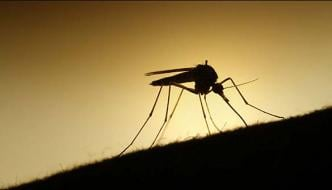 Malaria Day To Be Observed Today