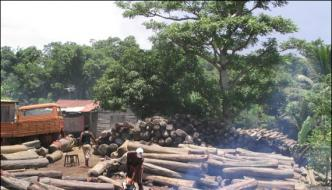 Pollution Is Rising To Cutting Of Trees Speakers At Seminar