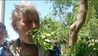 Man Belongs Gujranwala Eating Tree Leaves And Wood