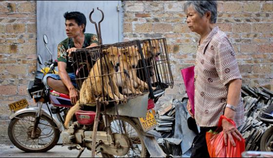 China The Possibility Of A Ban On Dog Meat During The Festival